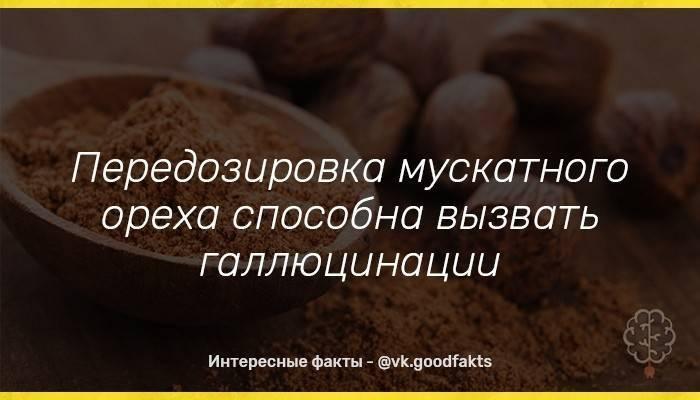 Мускатный орех - безопасная дозировка, психотропное воздействие - орех эксперт
