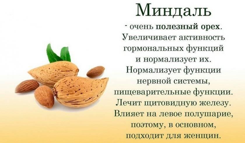 Жгучая пряность на вашем столе — мускатный орех: полезные свойства, способы использования и противопоказания