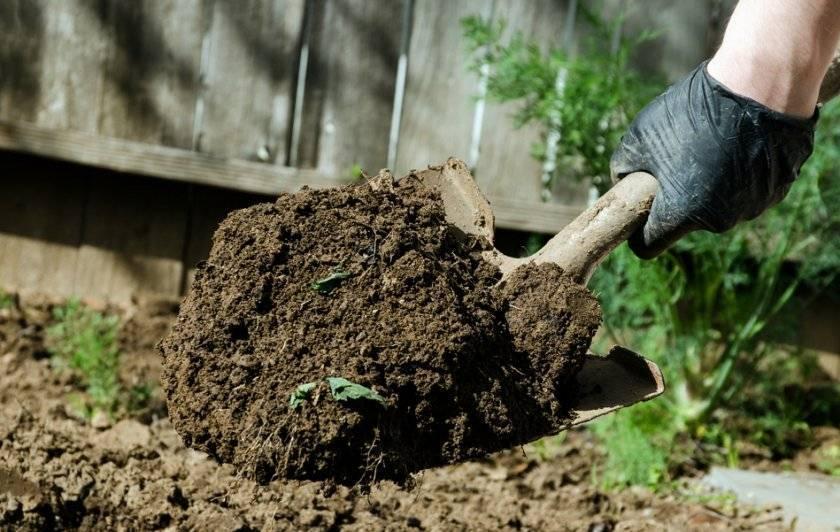 Как посадить грецкий орех - советы садоводам