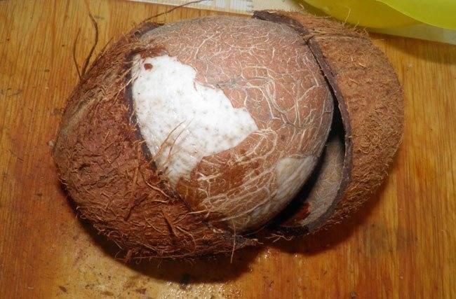 Как делают надрез в орехе макадамия, кто надпиливает и зачем