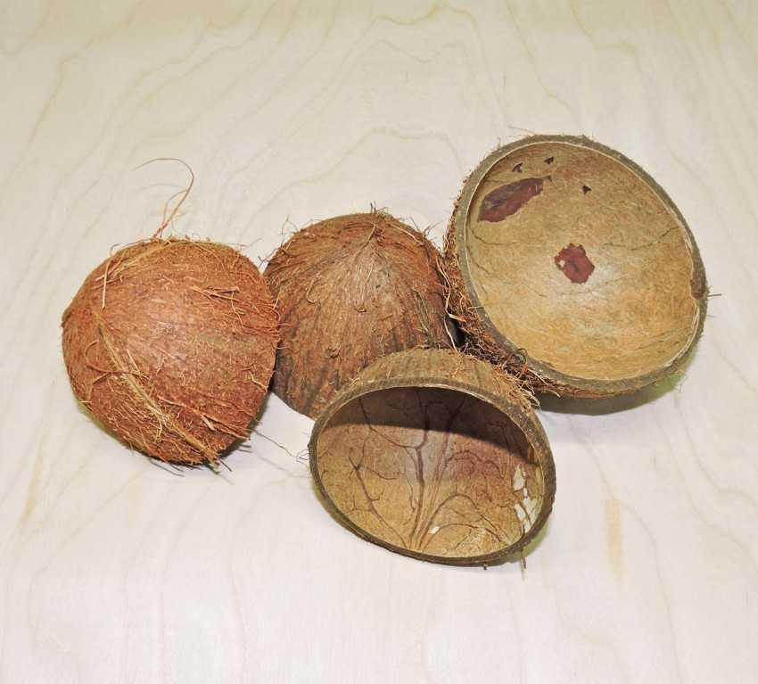Экзотический орех при гастрите: можно ли есть кокос и в каком виде? выбор плода и правила употребления
