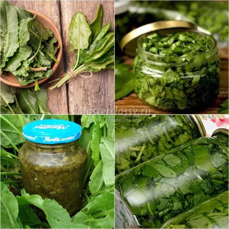 Чем отличается шпинат от щавеля: фото и описание, в чем разница таких овощей по внешнему виду и химическому составу, а также можно ли один из них заменить другим русский фермер