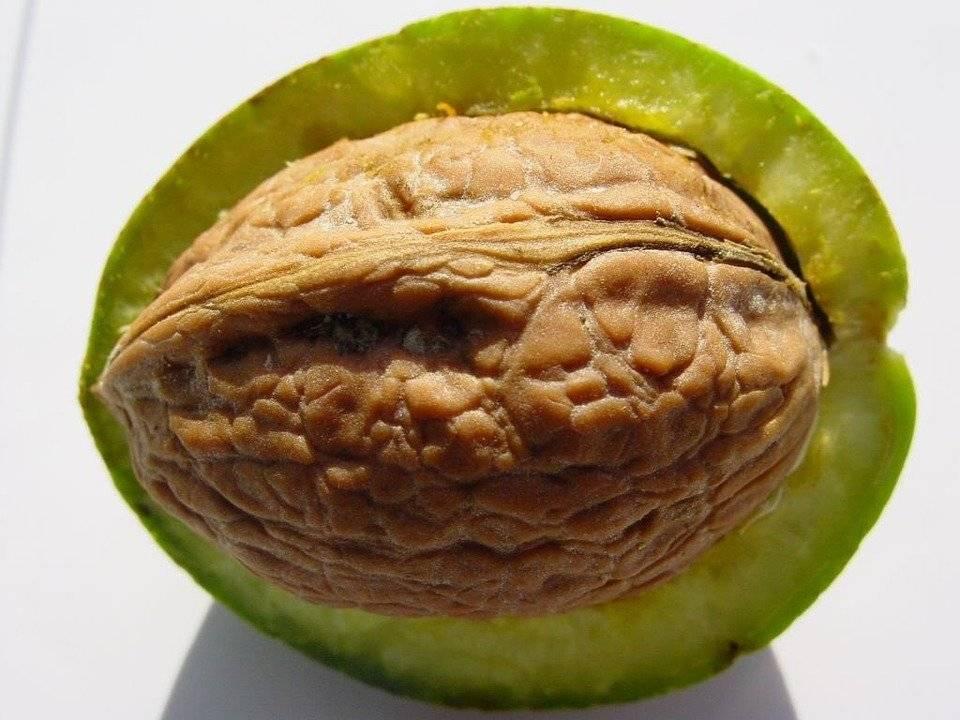 ✅ почему горчат кедровые орехи, как убрать горечь из очищенных ядер, можно ли есть прогорклые плоды - tehnoyug.com