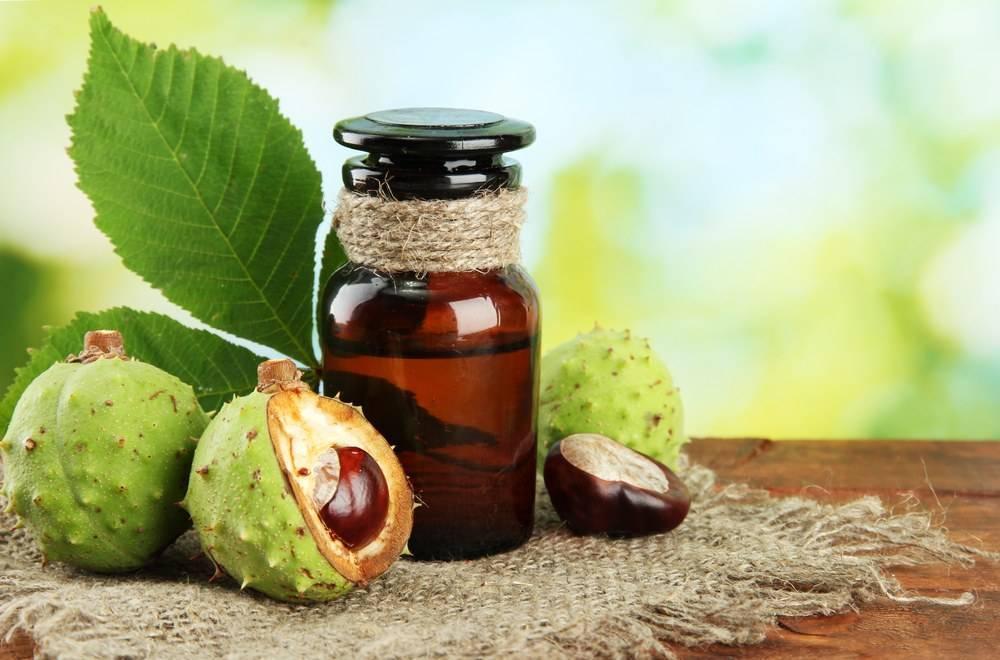 Конский каштан: лечебные свойства и противопоказания для применения плодов, рецепты настоек
