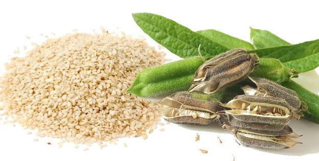 Полезные свойства кунжута и как его употреблять. как растет кунжут? где в россии растет сезам