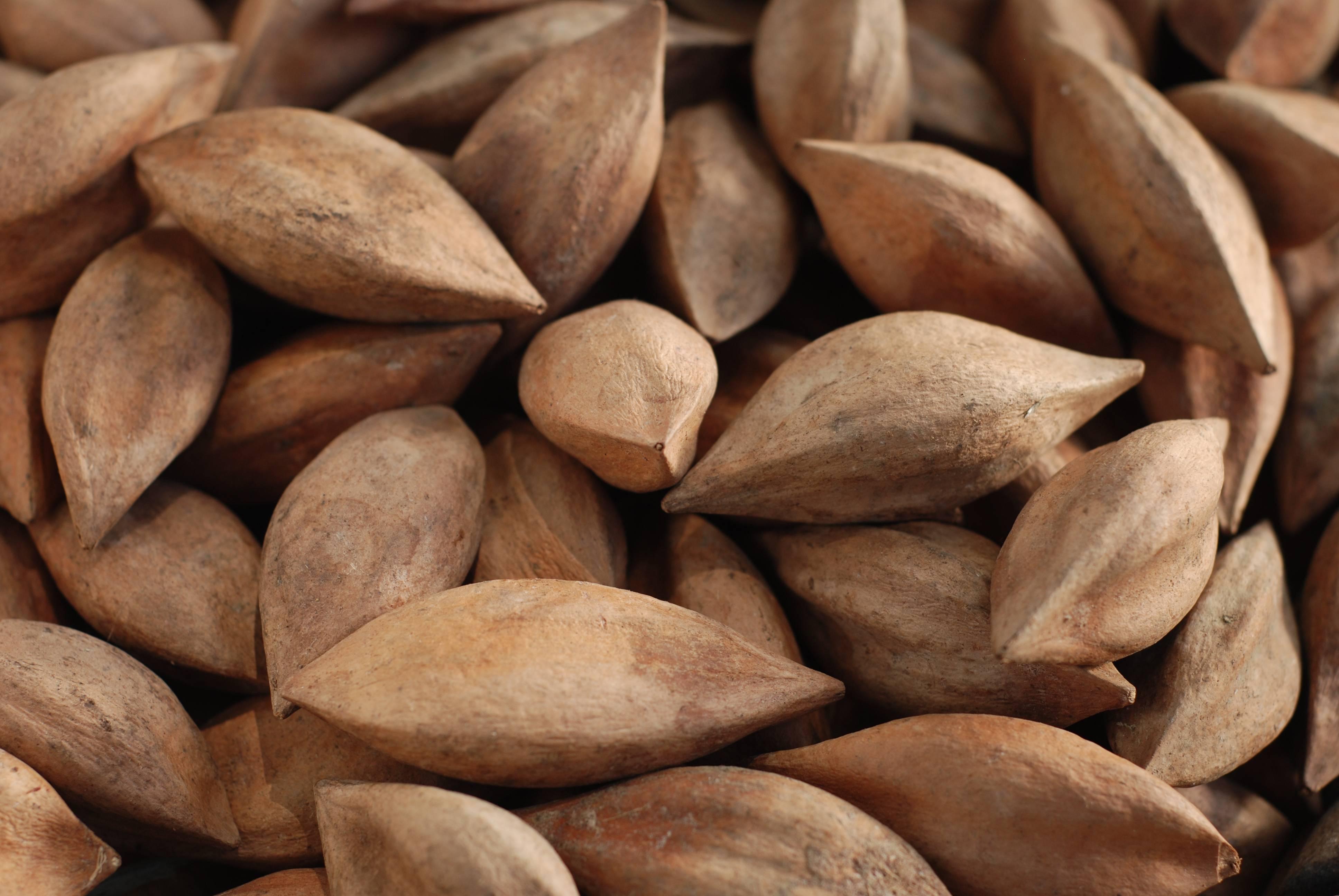 Водяной орех чилим: польза и вред для организма, описание, рецепты