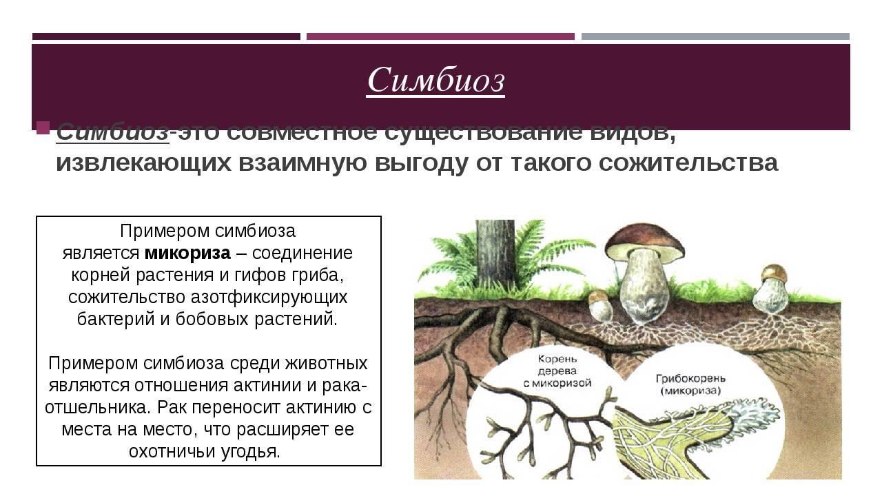 Микориза - почва под грибным соусом -прочее -о растениях -статьи