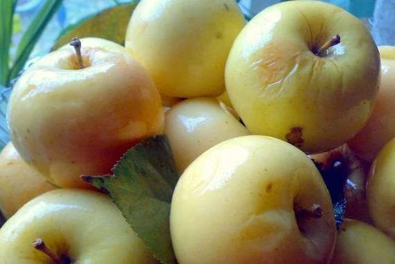 Яблоки моченые в ведре на зиму — простые домашние рецепты