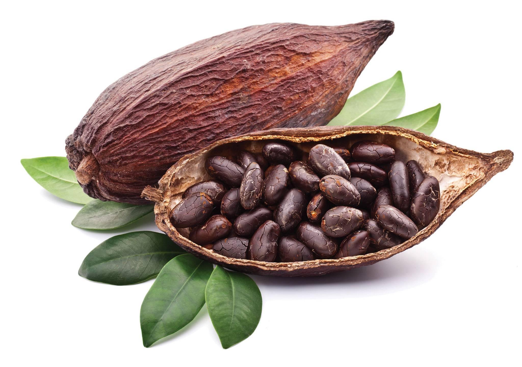 Полезные свойства и вред какао-бобов