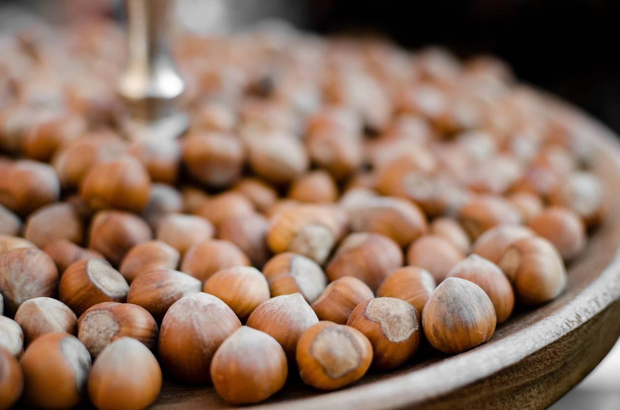 Промышленные сорта фундука — портал ореховод
