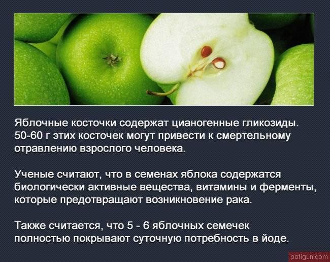 Косточки яблок: польза и вред, состав, можно ли есть
