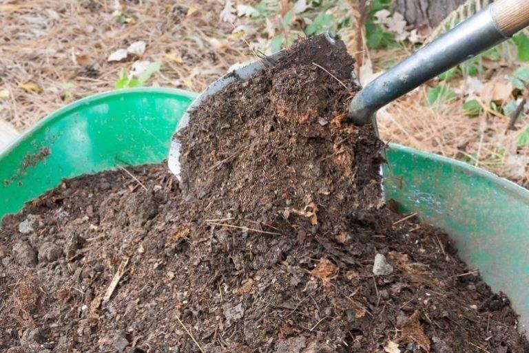 Какую почву любит грецкий орех: как правильно выбрать тип, состав и влажность грунта, а также нужна ли предварительная подготовка земли перед посадкой культуры?
