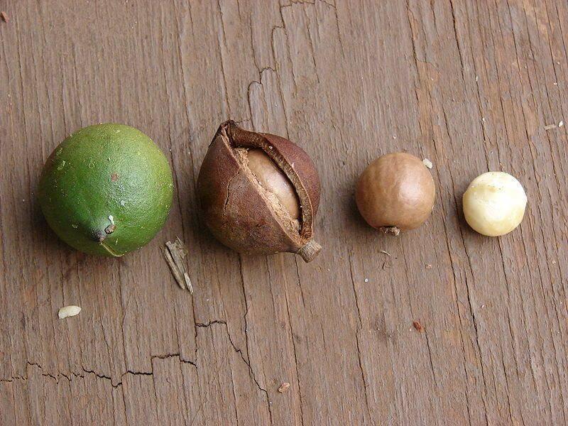 Съедобные и несъедобные каштаны: как отличить, какие можно есть съедобные и несъедобные каштаны: как отличить, какие можно есть
