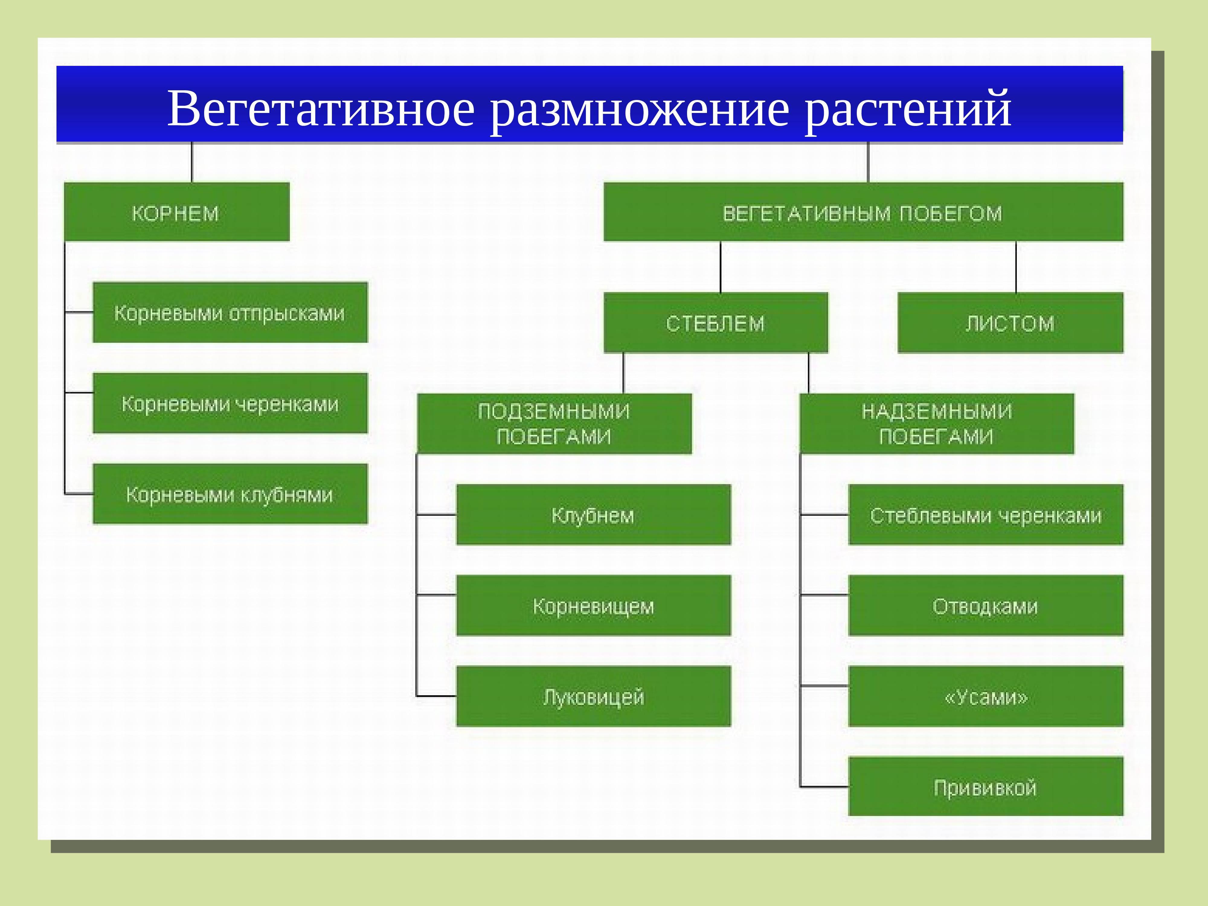 Вегетативное размножение - vegetative reproduction
