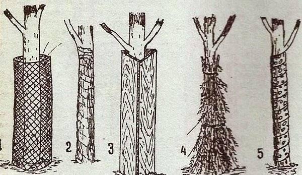 Как правильно укрывать хвойные растения на зиму: 5 полезных советов.