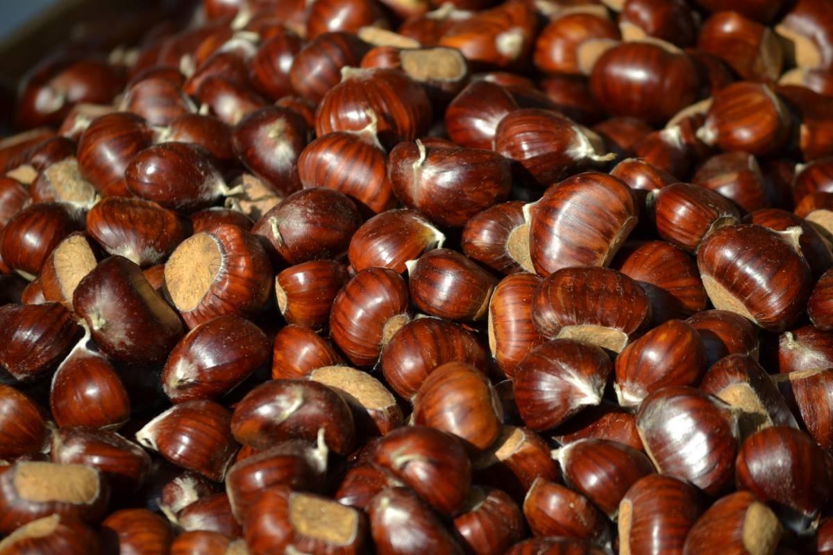 Как вырастить каштан из ореха в домашних условиях: съедобный, конский (видео, фото)