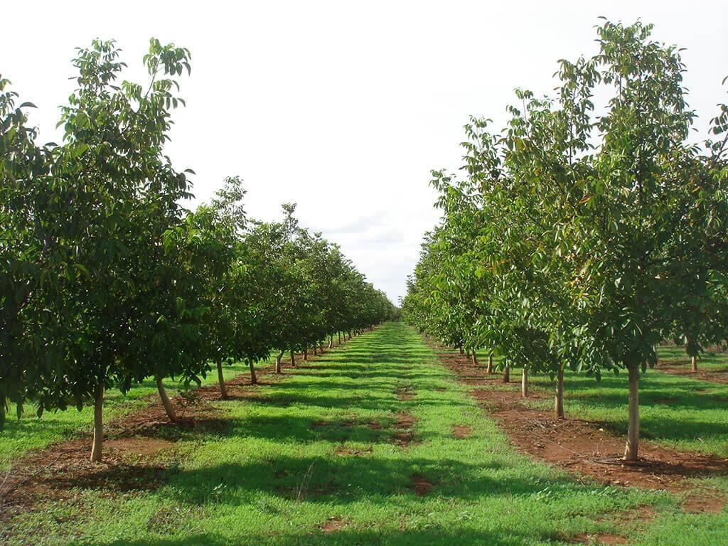 Особенности системы защиты садов по зонам садоводства | аппяпм
