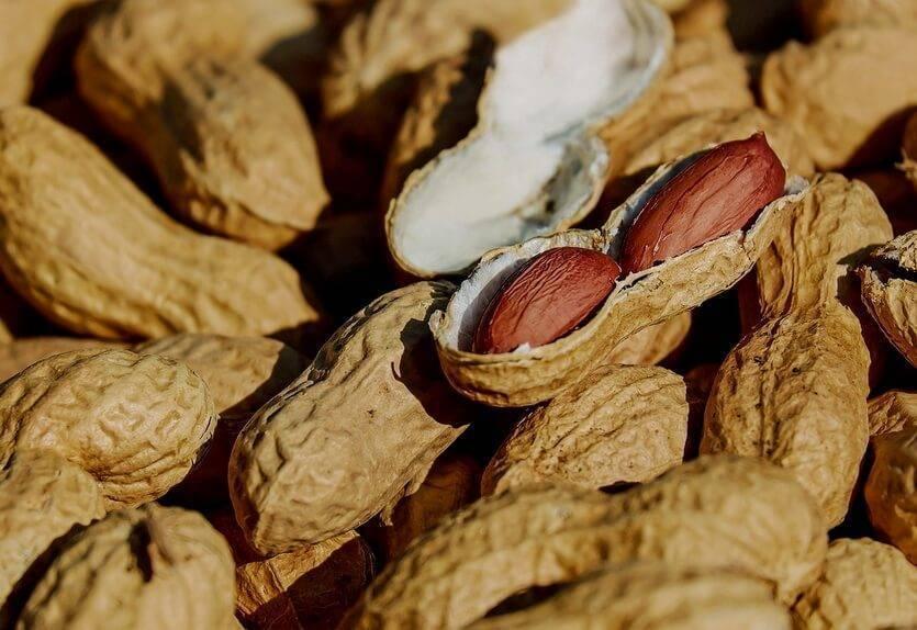 В каких условиях и как растет арахис? выращивание арахиса на приусадебном участке