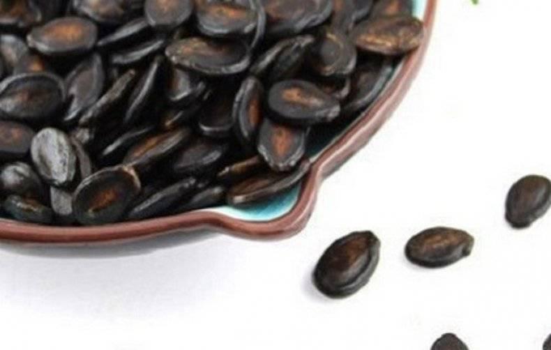 Семечки подсолнуха: польза и вред для организма человека, лечебные свойства белых семечек