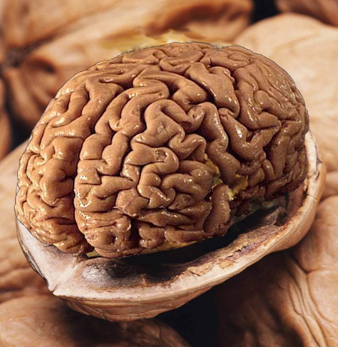 17 продуктов, полезных для мозга и памяти: список продуктов для улучшения работы мозга | kadrof.ru