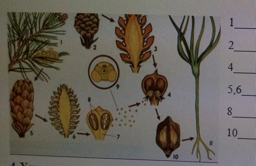 Генлисея хищное растение фото разновидностей выращивание из семян и уход в домашних условиях