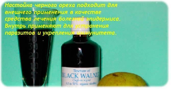 Черный орех: полезные свойства и противопоказания | пища это лекарство