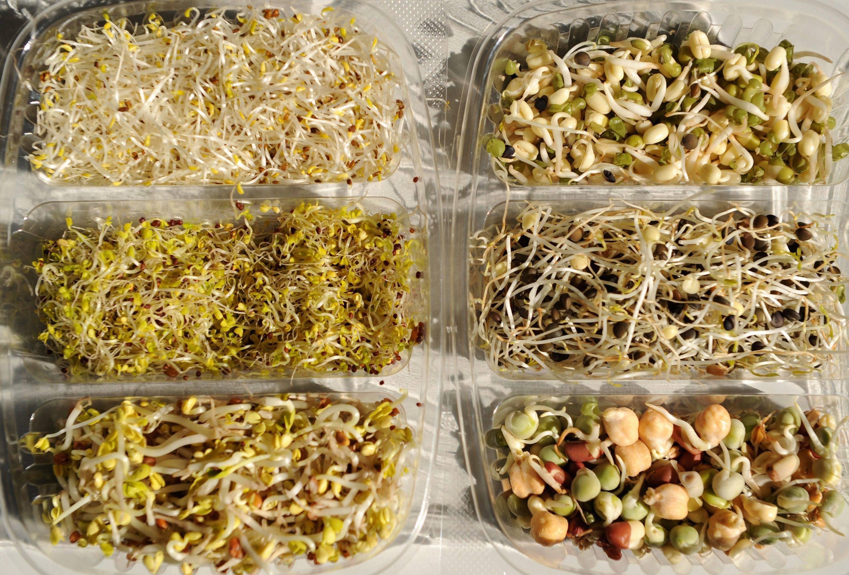 Пророщеные гречка, маш, нут, овес, чечевица - чем полезны пророщенные зерна, семена и орехи, как их проращивать и употреблять