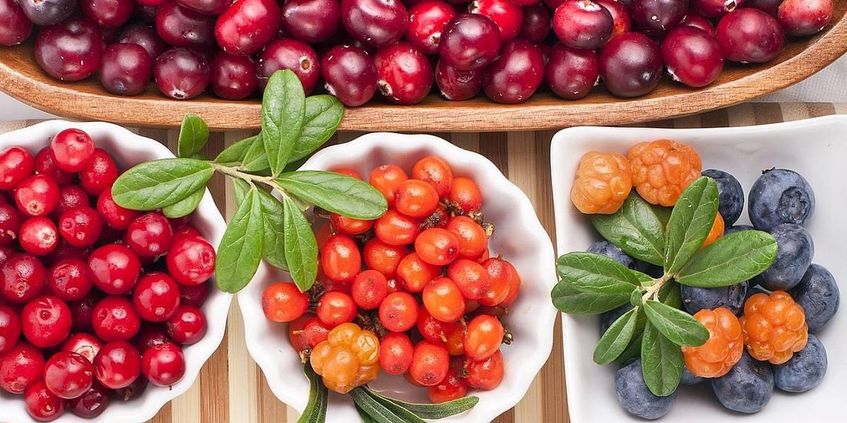 Дикорастущие ягоды (брусника и клюква) / асиенда.ру