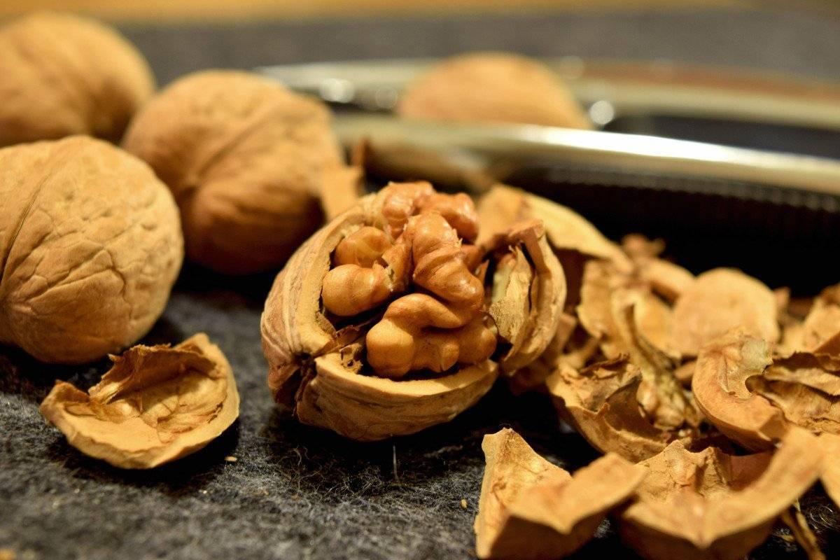 Грецкий орех – польза и вред для организма