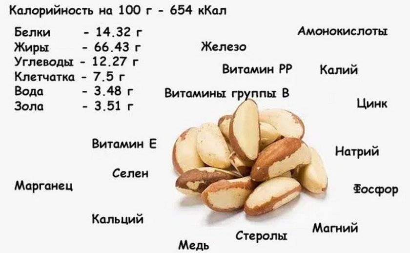 Орех кола. состав, полезные свойства и применение ореха кола