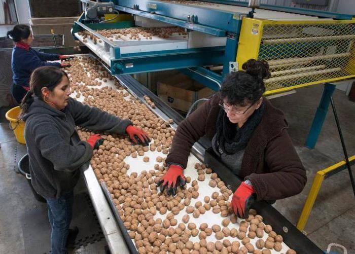 Промышленное выращивание орехов Как не получить убытки