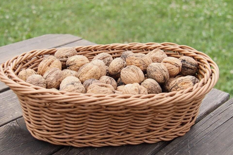 Всё о применении скорлупы и перепонок грецкого ореха - полезные свойства, рецепты народной медицины, противопоказания и отзывы