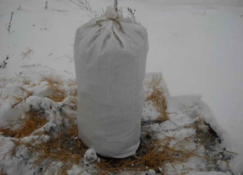 Как и чем укрыть абрикос на зиму и когда начинать подготовку к холодам