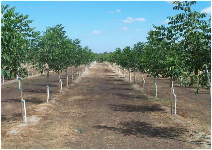 Приватизация земли - получить право собственности на землю: дачного (садового) участка, под частным домом, гаражом