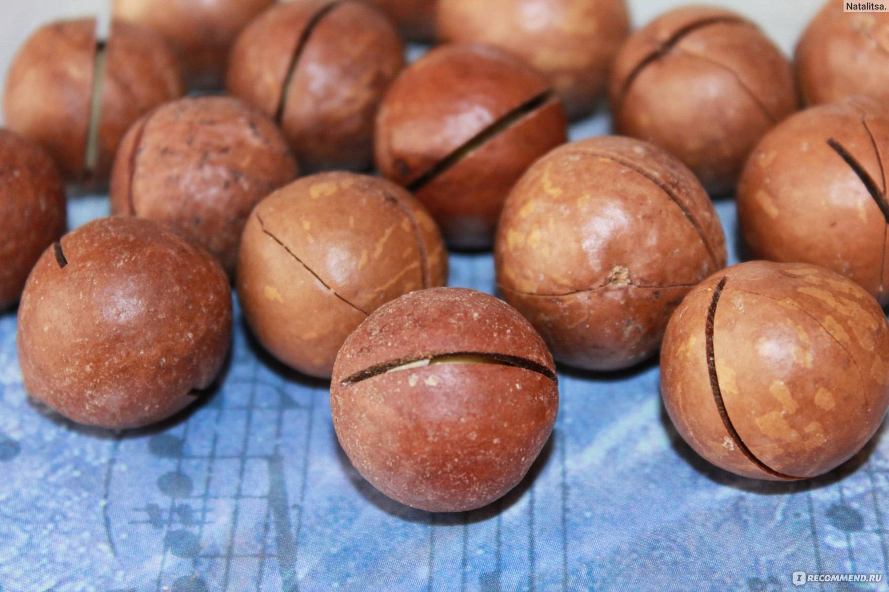 Макадамия — орех, который открывают ключом: как еще называется, где растет, зачем ему надрез?