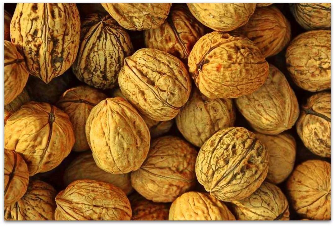 Виды орехов — самый большой список названий с описанием полезных свойств, фотографии, видео, отзывы и рекомендации