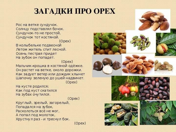Грецкие орехи - символ изобилия долголетия и красоты
