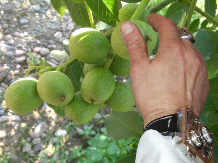 Сочетание плодовых деревьев и ягодных кустарников: правила в вашем саду | огородники