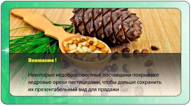 Норма грецких орехов в день и доза в месяц: сколько штук нужно съедать каждые сутки, можно ли кушать много, что будет, есть ли вред от чрезмерного употребления?
