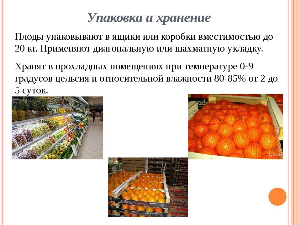 Хранение овощей в овощехранилищах: как правильно хранить
