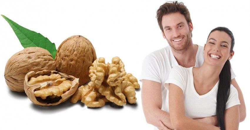 Полезные свойства орехов для мужчин, влияние на потенцию и возможный вред