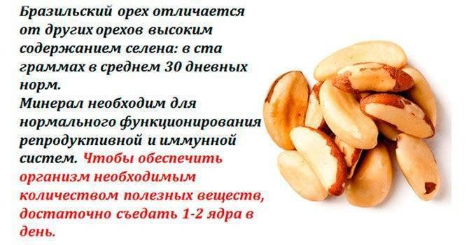 Бразильский орех и его полезные свойства для организма