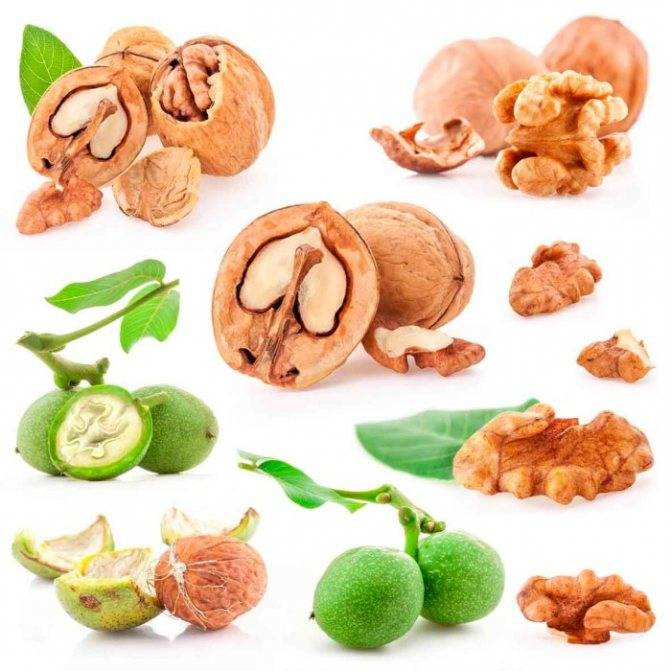 Можно ли использовать скорлупу грецких орехов с лечебными целями и какие свойства полезны для человека?
