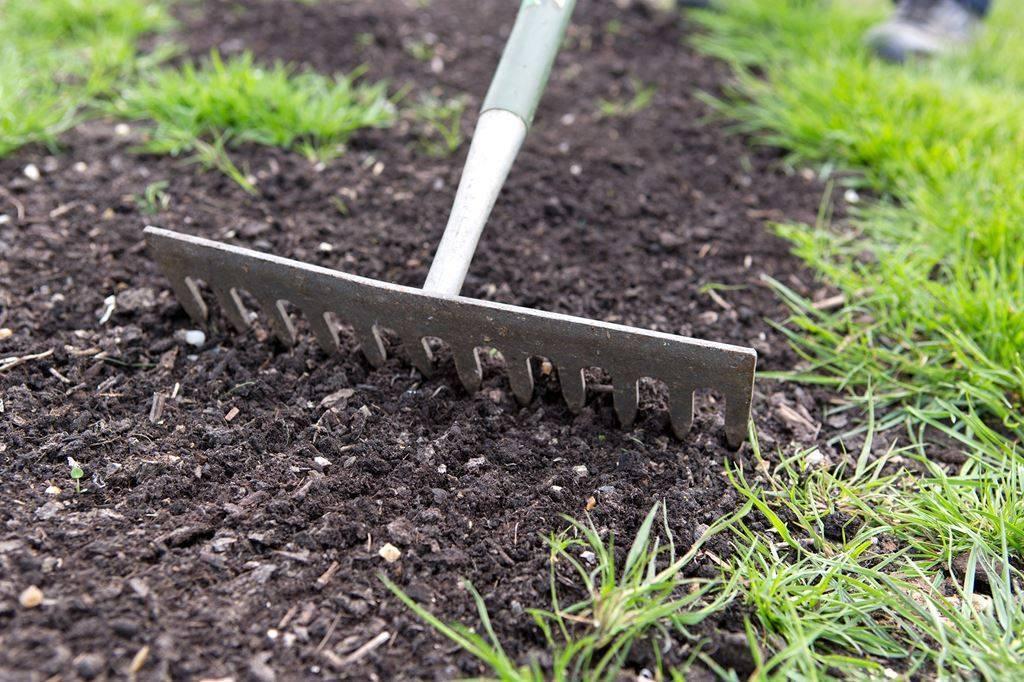 Сидераты для сада и дачи