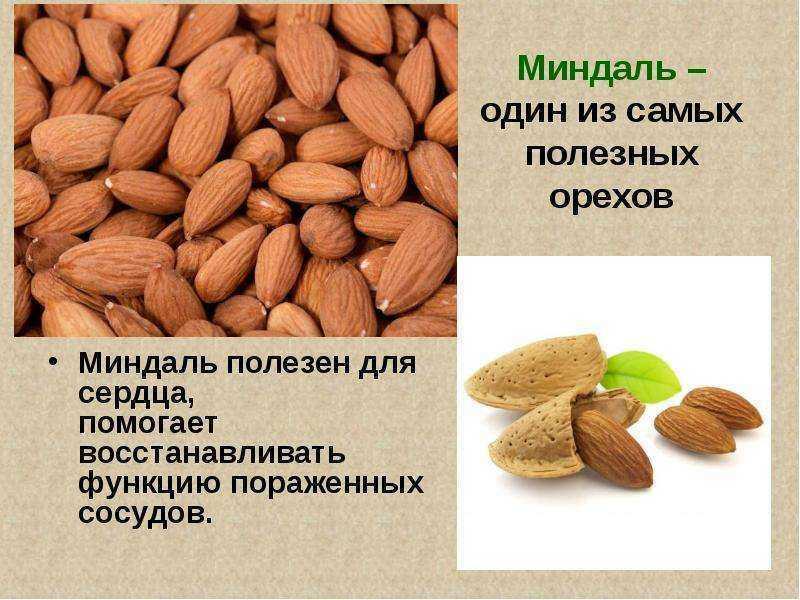 Семь самых полезных орехов