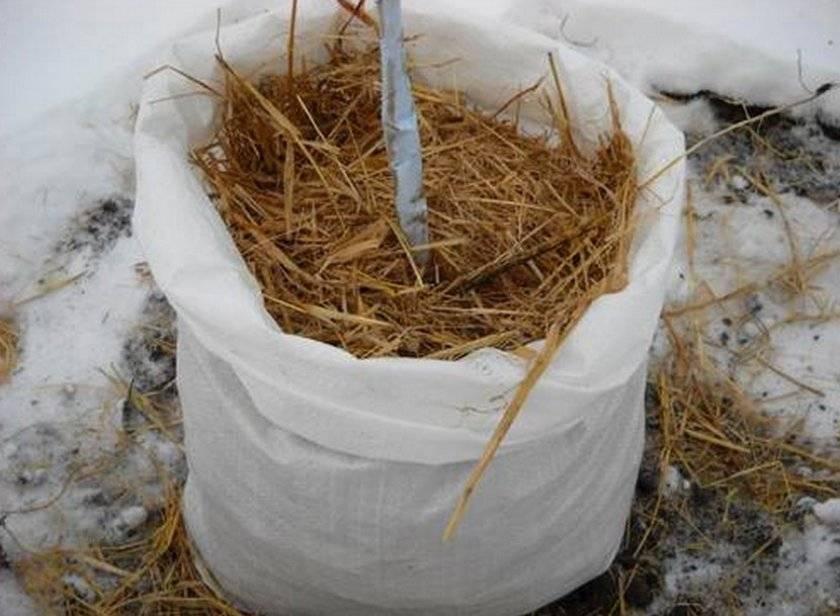Укрытие молодых плодовых деревьев на зиму: как и как утеплить, фото – zelenj.ru – все про садоводство, земледелие, фермерство и птицеводство