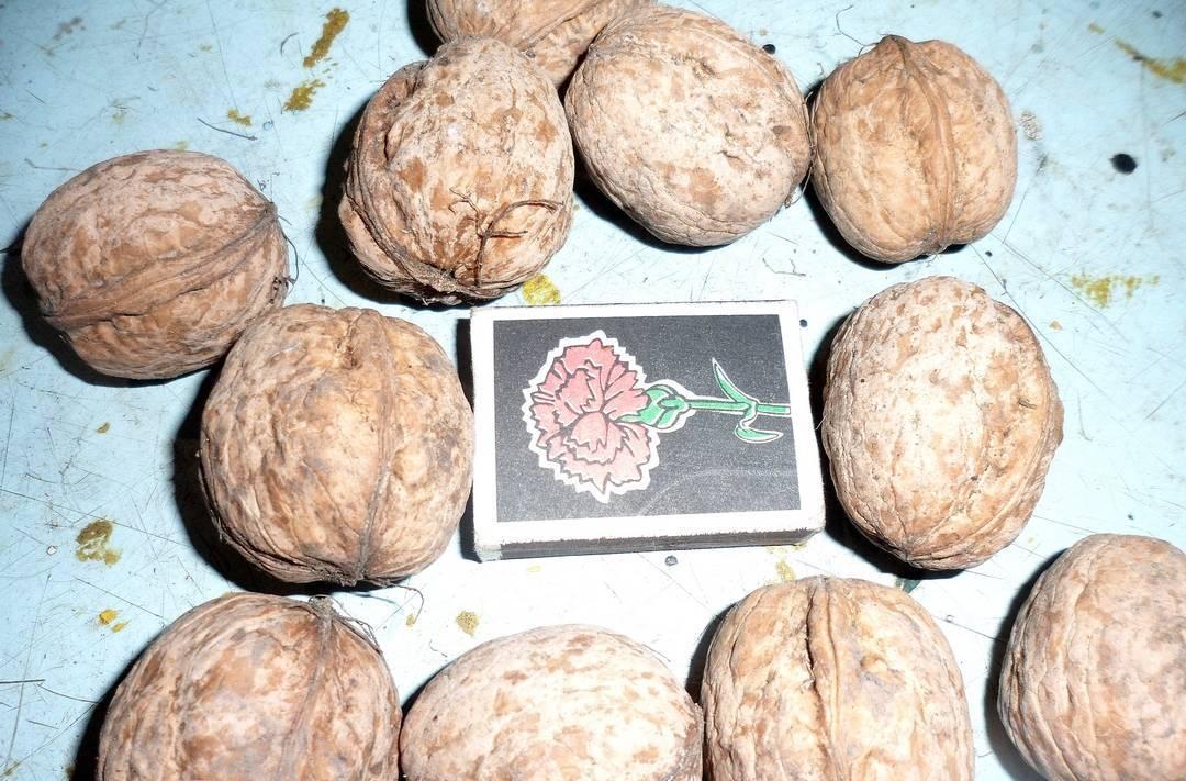 Грецкий орех - описание, полезные и вредные свойства, состав, калорийность, рецепты, фото, как посадить грецкий орех дома