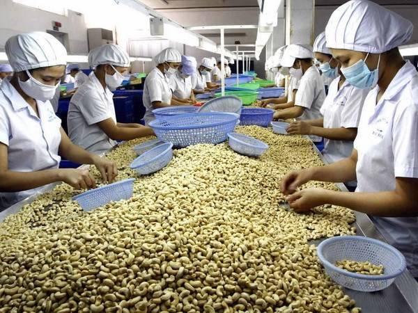 Как чистить кедровые орешки в домашних условиях, в промышленных масштабах, какое надо оборудование на производстве, как быстро, легко колоть скорлупу ореха машинкой?