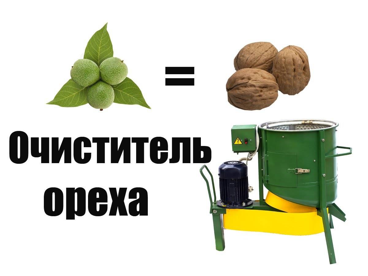 Как хранить орехи в домашних условиях (в том числе очищенные), чистить от скорлупы, нужно ли их мыть