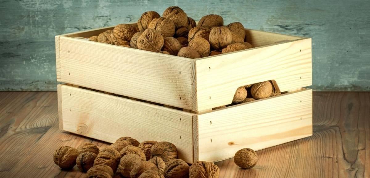Упаковка и хранение грецких орехов